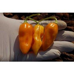 Bhut Jolokia Orange