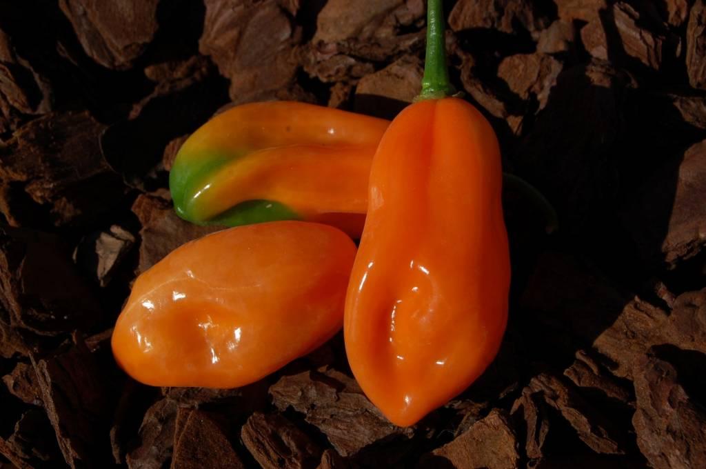 Pickersgills Orange
