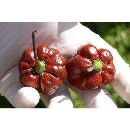 Trinidad Scorpion Moruga Chocolate