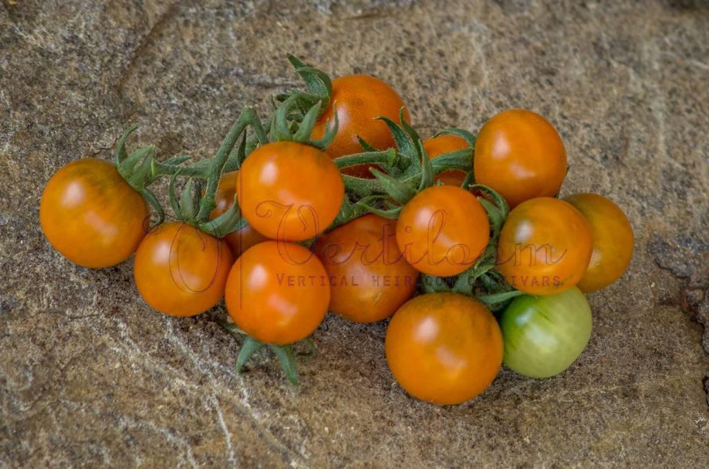 Dark Orange Muscat