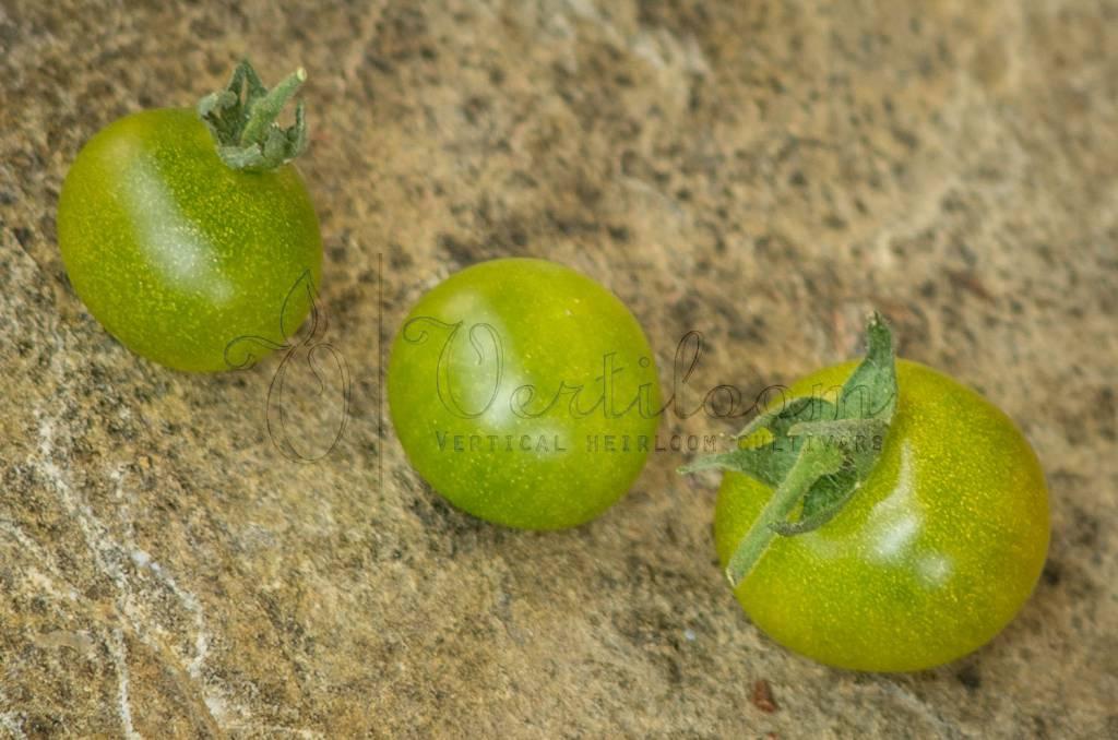Green Krim Cherry