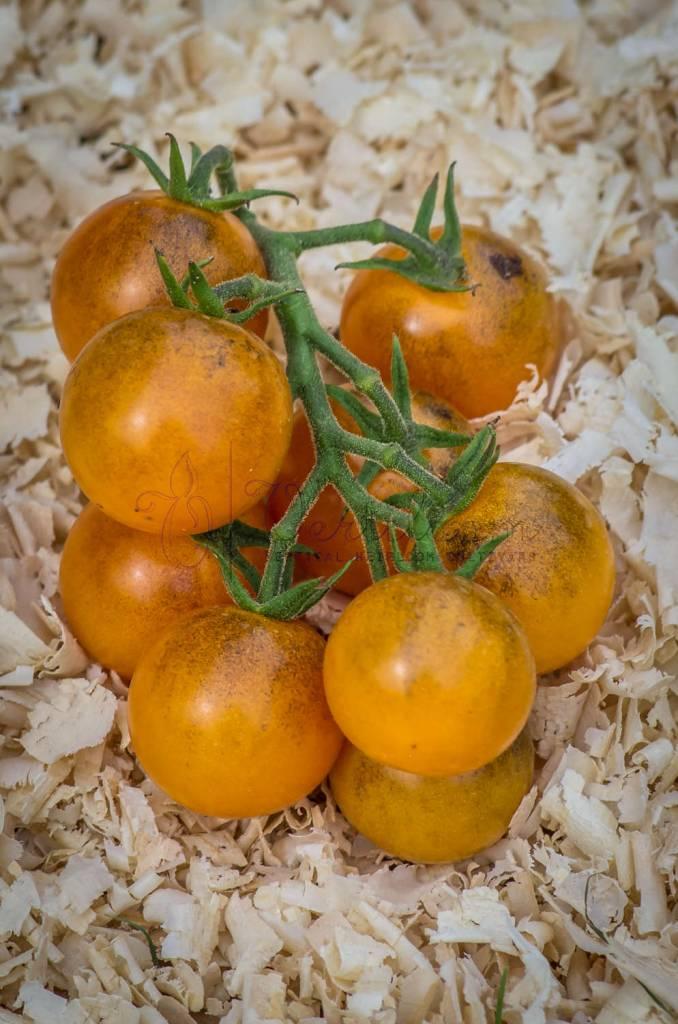 Ambrosia Bronze Cherry