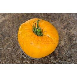 Amish Orange Sherbet