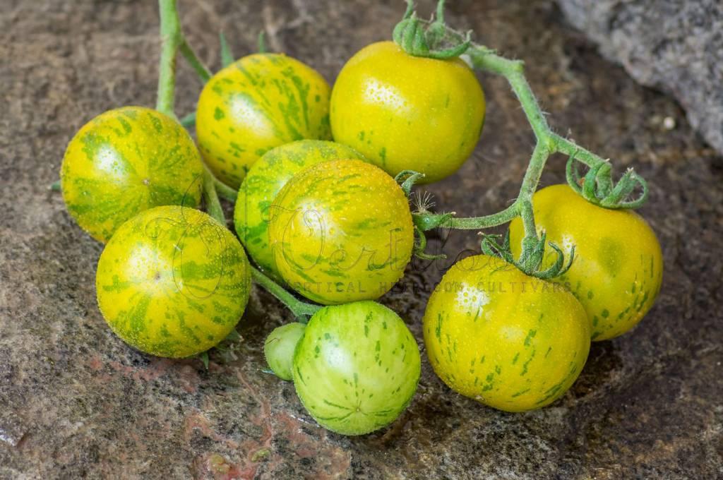 Grun Gelb Gestreiffte Tomato Vertiloom