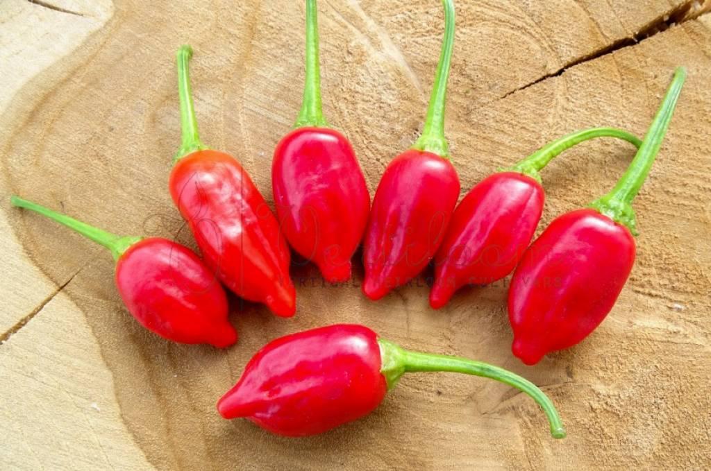 Inca Red Drop