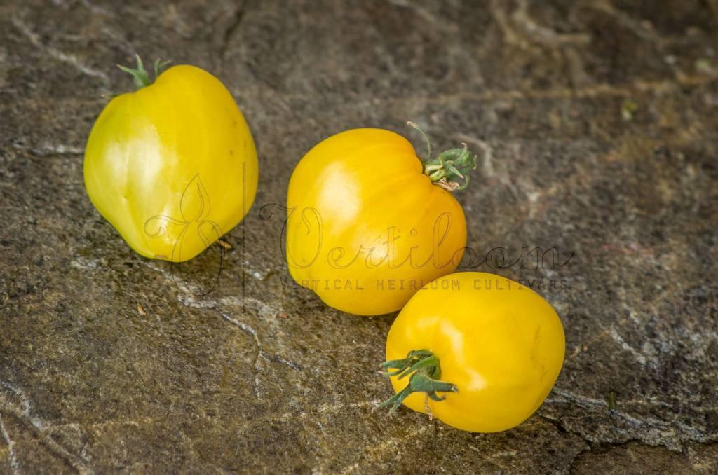 Dwarf Lemon Ice