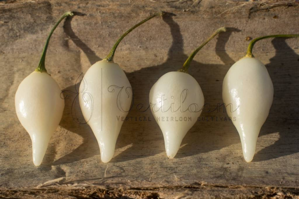 Biquinho White - Chupetinho White