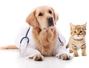 De gezondheid van hond & kat