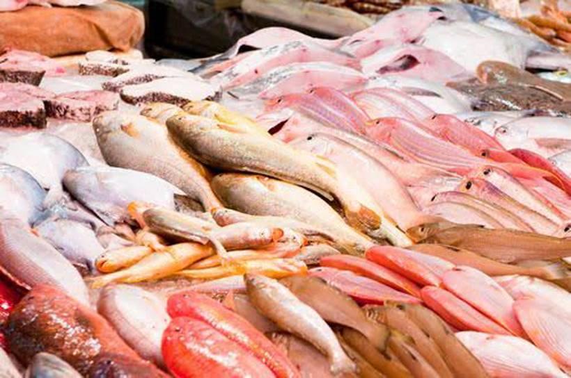 Vis is gezond, ook voor kat & hond!