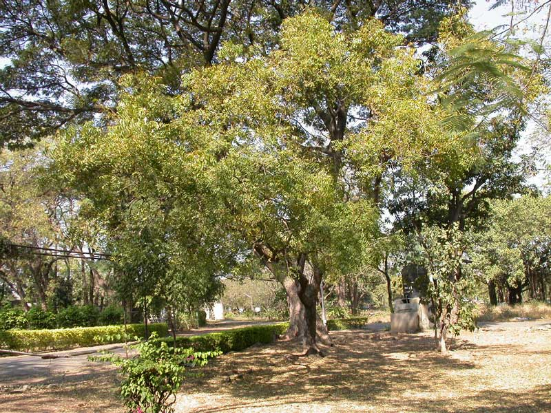 De Neem Tree levert o.a. producten die een natuurlijke insectwerende werking hebben!