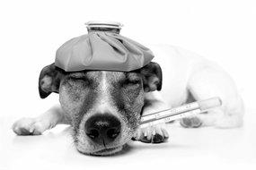 Diarree en spijsverteringsproblemen bij honden