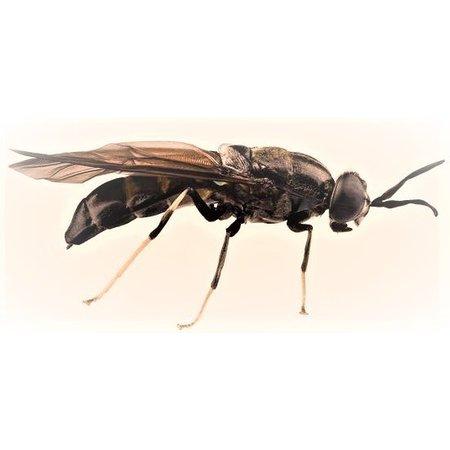Bugs for Pets Krokante brok op basis van insecten eiwit