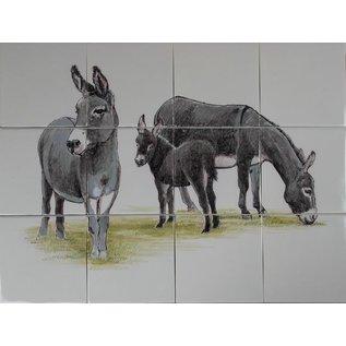 Dieren - Tieren - animals RH12-R donkey