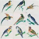 Dieren - Tieren - animals RM1-5 Vogels
