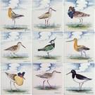 Dieren - Tieren - animals RH1-9k Weidevogels