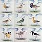 Dieren - Tieren - animals RH1-9k Vögel