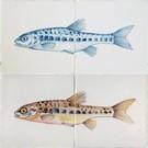 Dieren - Tieren - animals RH2-15 d Fisch