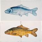 Dieren - Tieren - animals RH2-15-a Fisch