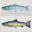 Dieren - Tieren - animals RH2-15b Lachs