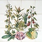 Bloemen - Blume - flowers RH12-4 plants with fruit
