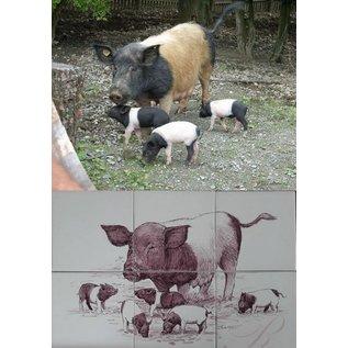 Dieren - Tieren - animals RH6R, pig