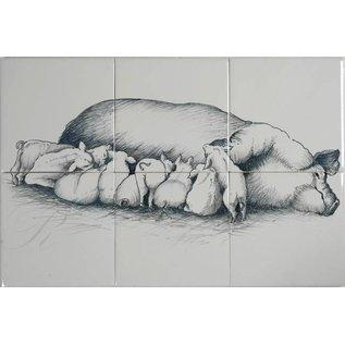 Dieren - Tieren - animals RH6-26 Schwein