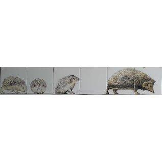 Dieren - Tieren - animals RH6-19, hedgehogs