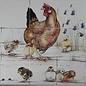 Dieren - Tieren - animals RH9-6, Henne