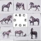 Dieren - Tieren - animals RKF1-4, horses