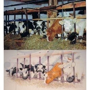 Voorbeelden - Fotogalerie - Photo Gallery Cows in the barn