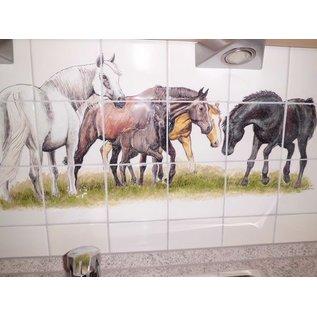 Voorbeelden - Fotogalerie - Photo Gallery Horses