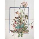 Bloemen - Blume - flowers RH12-1 Wasserliesch