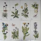 Bloemen - Blume - flowers RH2-8 kruiden