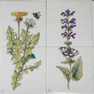 Bloemen - Blume - flowers RH2-8 Herbs