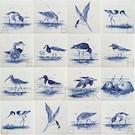 Dieren - Tieren - animals RH1-8b Waddenzee vogels