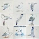 Dieren - Tieren - animals RH1-6 Seagulls
