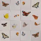 Dieren - Tieren - animals RH1-40k, Butterfly