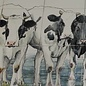 Dieren - Tieren - animals koeien