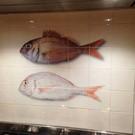 Voorbeelden - Fotogalerie - Photo Gallery Fish