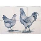 Dieren - Tieren - animals RH6-10, Rooster and Chicken
