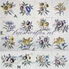 Bloemen - Blume - flowers RF1-6 Friese bloem
