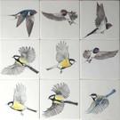 Dieren - Tieren - animals Freie Vögel
