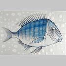 Dieren - Tieren - animals RH24-Fish20