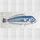 Dieren - Tieren - animals RH10-Fish14