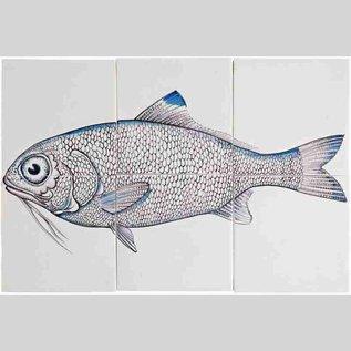 Dieren - Tieren - animals RH6-Fish10