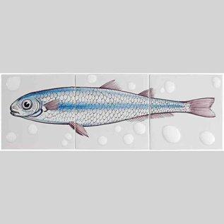 Dieren - Tieren - animals RH3-Fish18