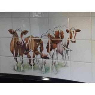 Voorbeelden - Fotogalerie - Photo Gallery Kühe rotbunte Holsteiner