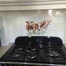 Voorbeelden - Fotogalerie - Photo Gallery Red Holstein cows