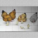 Dieren - Tieren - animals RH24R-Hühner