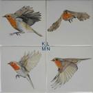 Dieren - Tieren - animals RH1-38 robin